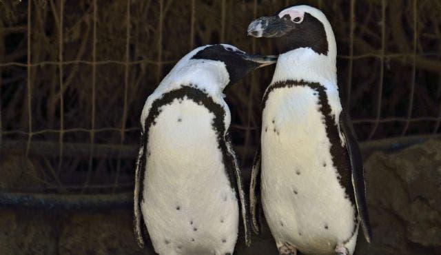 La pareja de pingüinas lesbianas que les robará el corazón